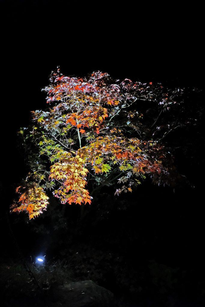Lichtontwerp boompjes landgoed