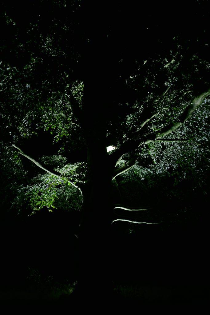 Lichtontwerp bomen landgoed