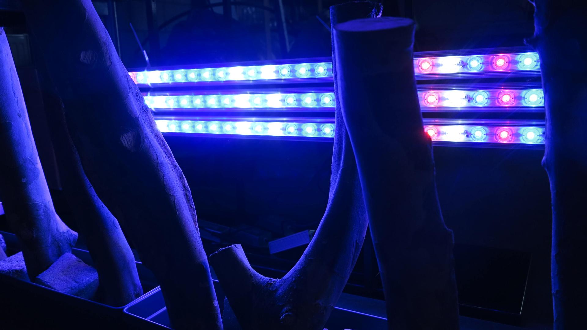 Experimenten bioluminescentie